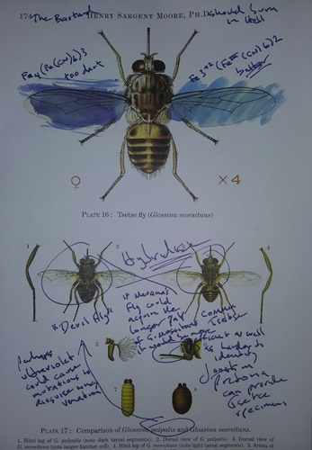 Book about flies
